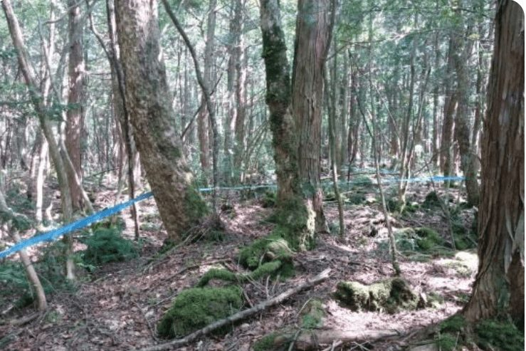 Ropes and ribbons found in Japanese Suicide Forest