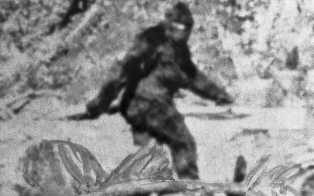 Photos Of A Bigfoot