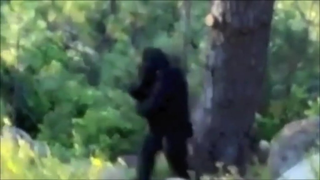Most Convincing Bigfoot Sightings Around The World