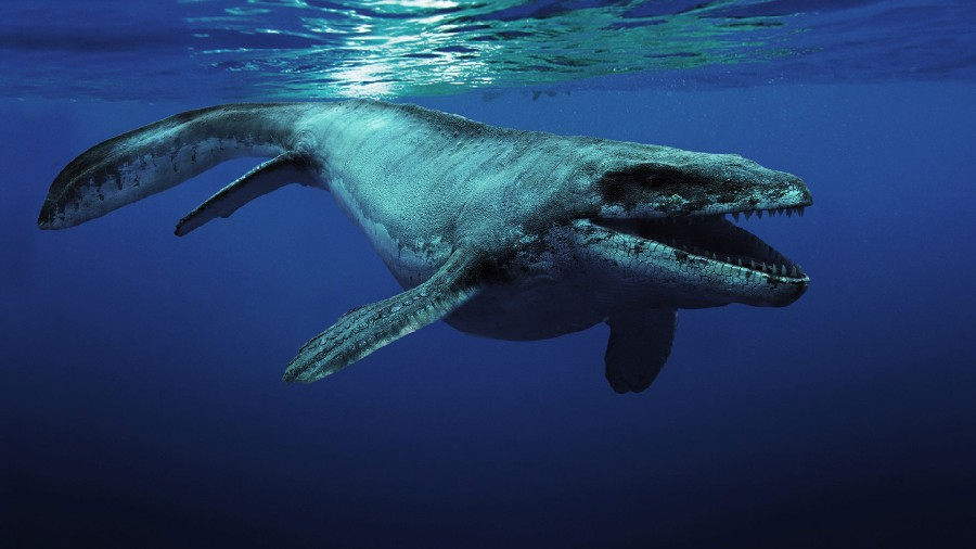Scientist Affirms That Loch Ness Monster Might Be An Ancient Sea Turtle
