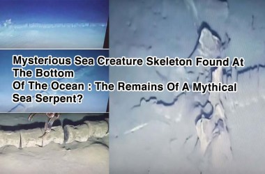 The Remains Of A Mythical Sea Serpent?