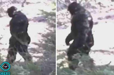 Bigfoot In Idaho