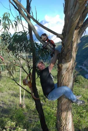 Dan in Tree