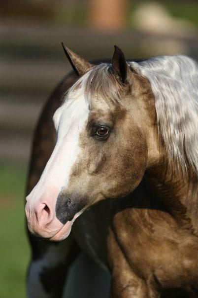 Big Chex To Cash Stallion In Foal Partners Quarter Horse
