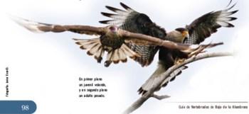 Guía de vertebrados de Bajo de la Alumbrera