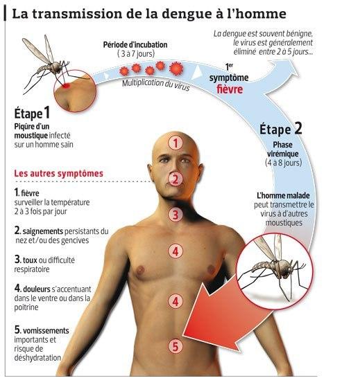 27 morts de la dengue en Thaïlande - Actu, Santé 3