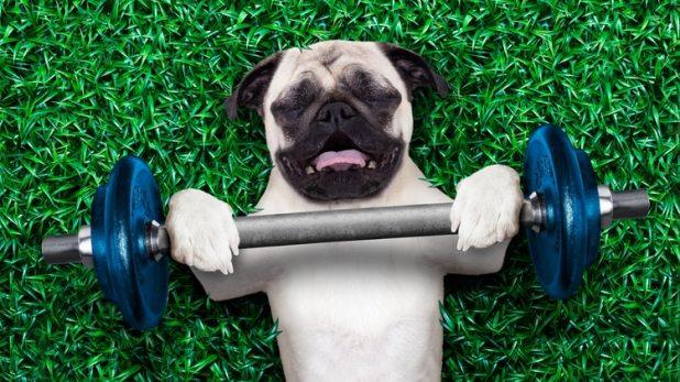 El ejercicio, una clave que no puede faltar en la rutina diaria de la actividad de los animales