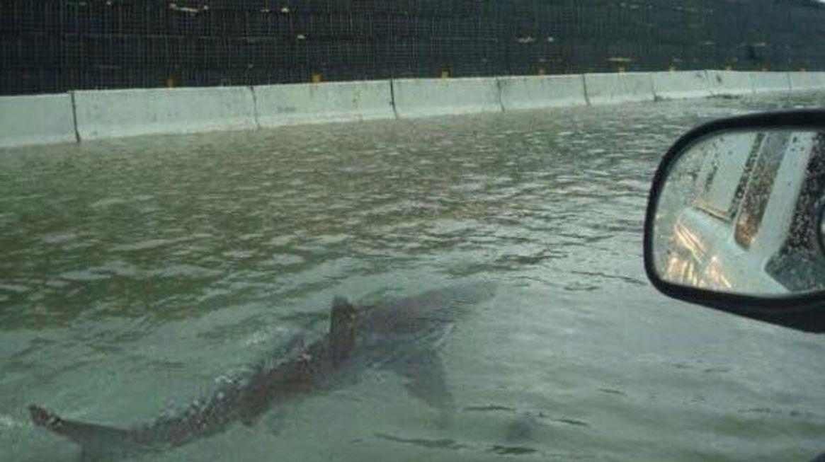 Imagen falsa de un tiburón nadando por una calle inundada tras un huracán.