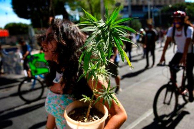 Una mujer carga hoy una planta de marihuana durante una marcha a favor de la legalización del consumo recreativo
