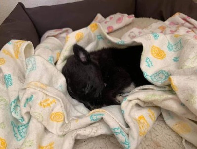 Otra mascota que el acusado recibió en adopción y después desapareció (Foto: Facebook The Pandu)