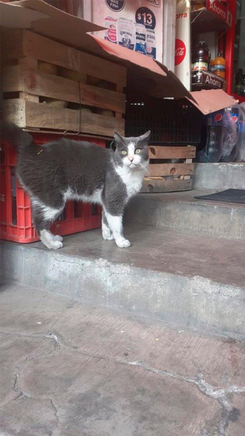 Mayo, posando en la tienda donde es conocido como Pancho (Foto: Cortesía Rosalinda Ortiz)
