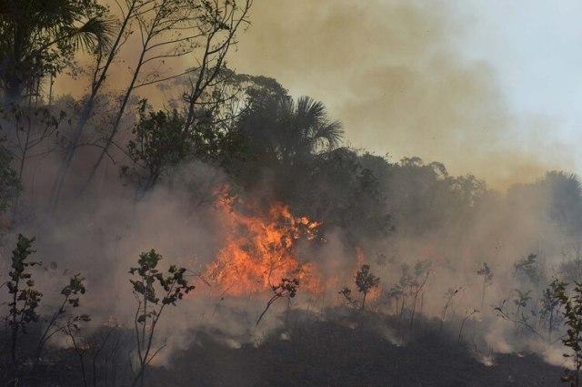 Los incendios forestales en el Amazonas han causado preocupación en Europa (REUTERS/Lucas Landau)