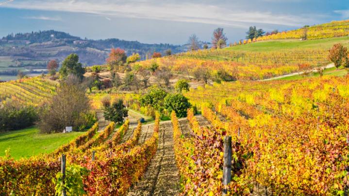Viñedos del Piamonte Italiano, uno de los orígenes de la uva Bonarda. (iStock)
