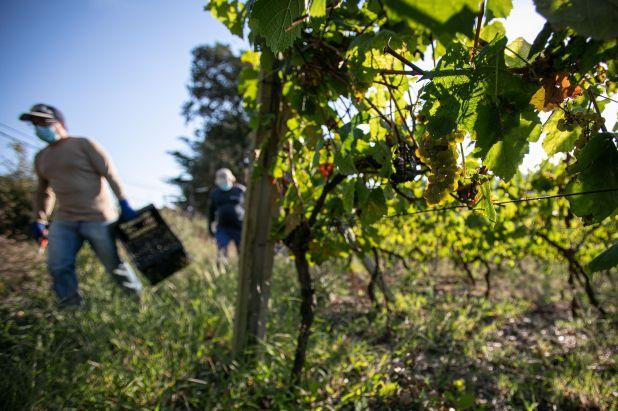 La elaboración de vinos fue considerado un rubro crítico, por lo que recibirán, si se inscriben en el ATP, un aporte hasta 2 salarios mínimos por trabajador