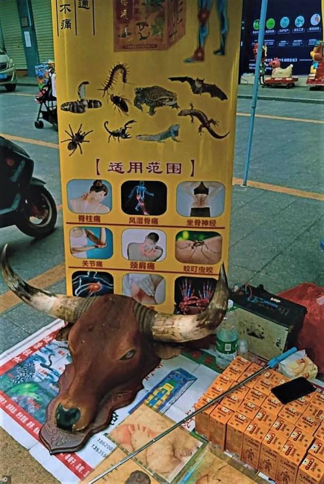 Un puesto de medicina tradicional en el mercado de Dongguan, en el sur de China, anuncia murciélagos y otros animales salvajes, como lagartos y escorpiones, como remedios legítimos para dolencias comunes (Gentileza The Daily Mail)