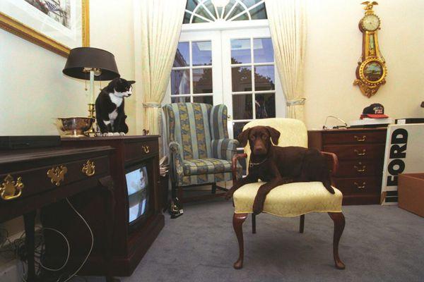 Su popularidad se debió a las constantes peleas con el perro de la familia Buddy