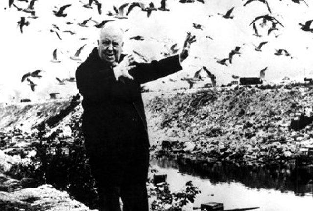 Alfred Hitchcock, que filmó más de 150 películas, que siempre jugó con el suspenso, la intriga, el crimen, el espionaje, la duda, la traición y la pasión, con Los Pájaros se metió de lleno en el pantano del terror (EFE)