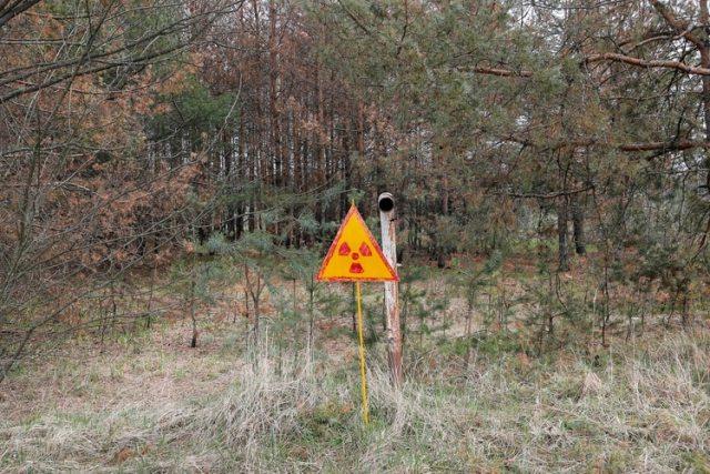 """El """"Bosque rojo"""", la forma como se conoce al cementerio vegetal que quedó en el área de cientos de kilómetros afectados por el escape radioactivo"""
