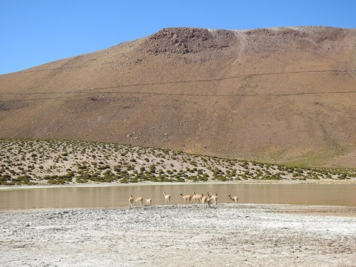 Atacama - Flavia Tomaello