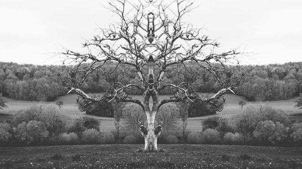 """Imágenes de """"Rorschach Photography"""" de Mat Piranda, vía"""