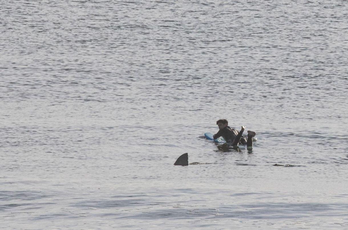 Joe Mault fotografió la escena durante la mañana del pasado viernes, cuando desde la orilla de la playa de Cape Cod se percató del peligroso animal acercándose hacia el nadador. (Facebook)