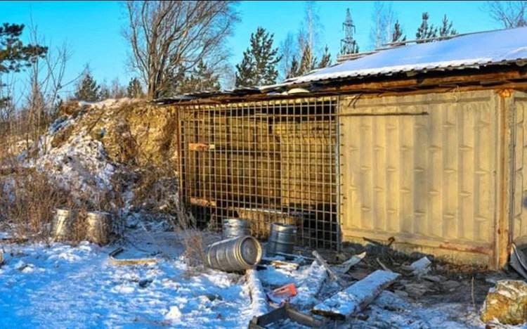 El galpón donde dormía el oso Vorchun fue encontrado abierto.