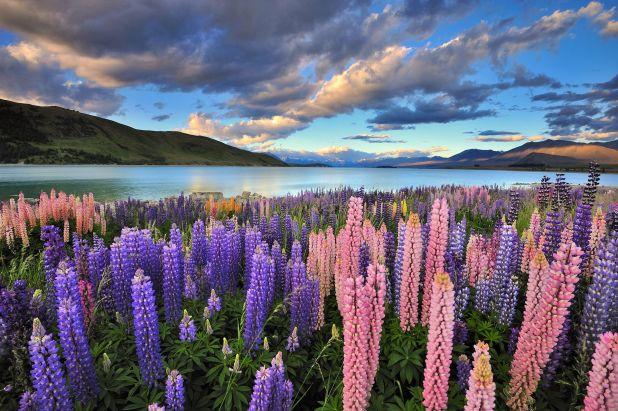 Las características topográficas dramáticas dominan el paisaje, desde los picos nevados de las montañas hasta la caprichosa flora seussiana