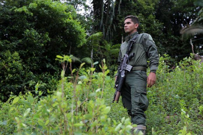 Un policía anti narcóticos vigila un cultivo de hoja de coca durante un operativo de erradicación en Tumaco, Colombia.