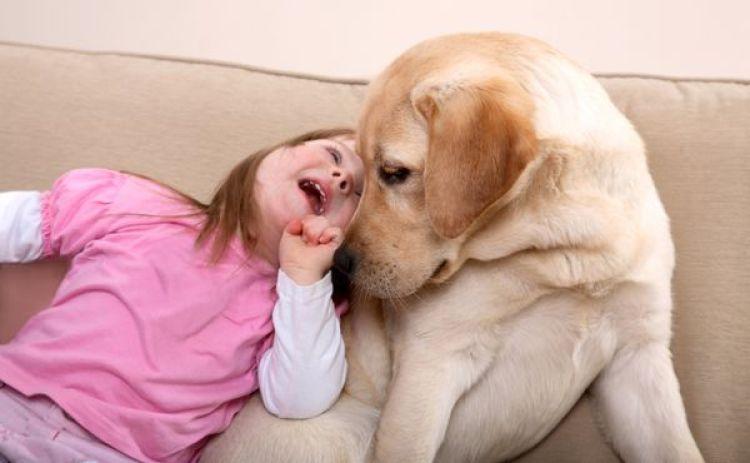 El perro de terapia de ayuda tiene una gran incidencia en la interacción, social, emocional, cognitiva, motor y mental (iStock)