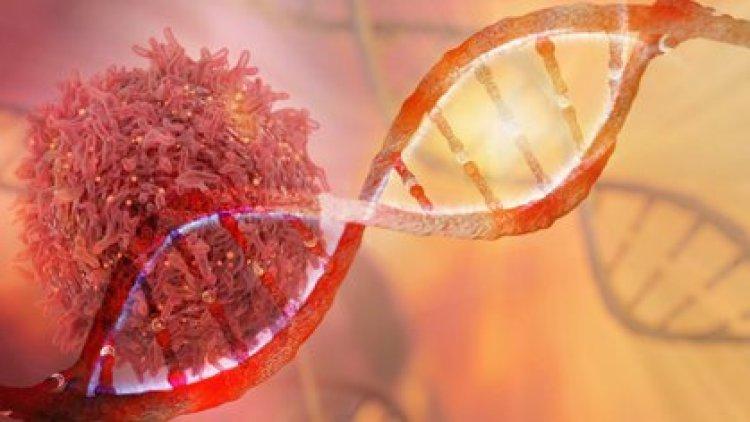 Los investigadores buscan evitar que las células cancerosas puedan reparar su ADN, lo cual podría detener la propagación de la enfermedad (Shutterstock)