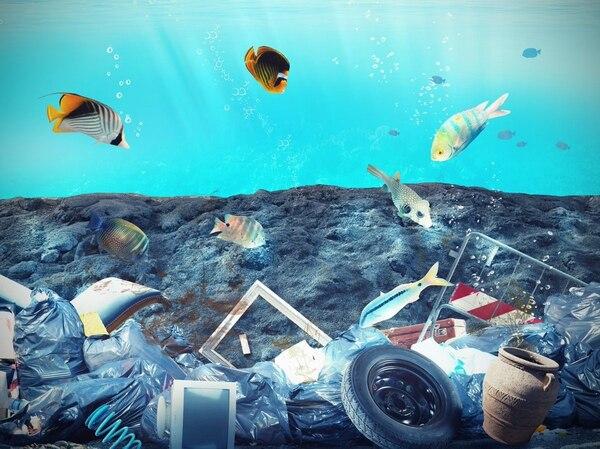 La contaminación plástica pone en peligro a 267 especies marinas