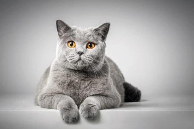 """El libro de Hattori abre con """"10 reglas básicas para entender a los gatos"""". (Shutterstock)"""