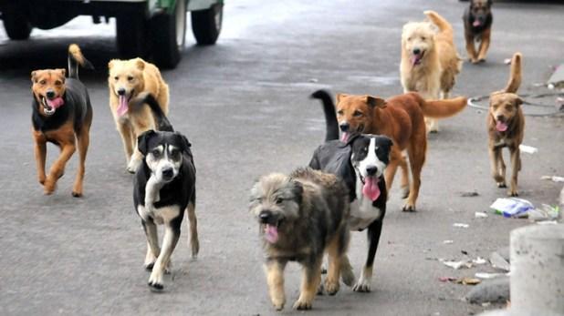 México, el país con más perros callejeros en América Latina ...