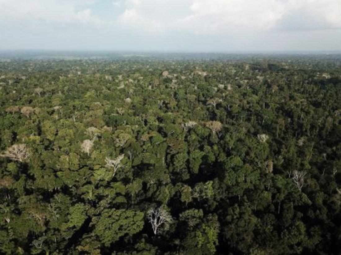 Amazonas. REUTERS/Nacho Doce/File Photo