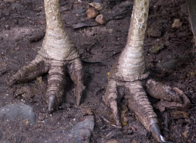 Las uñas que poseen en sus patas parecen dagas y son muy peligrosas (Foto: especial)