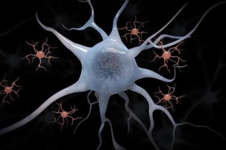 Neuronas.