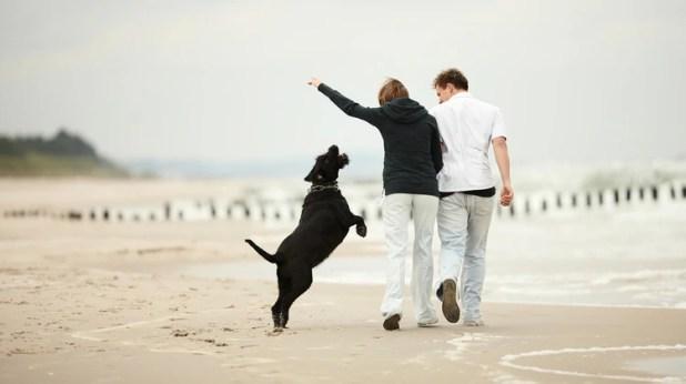 Caminatas junto a sus dueños. No quedarse en casa es la clave para que las mascotas también sean felices (iStock)
