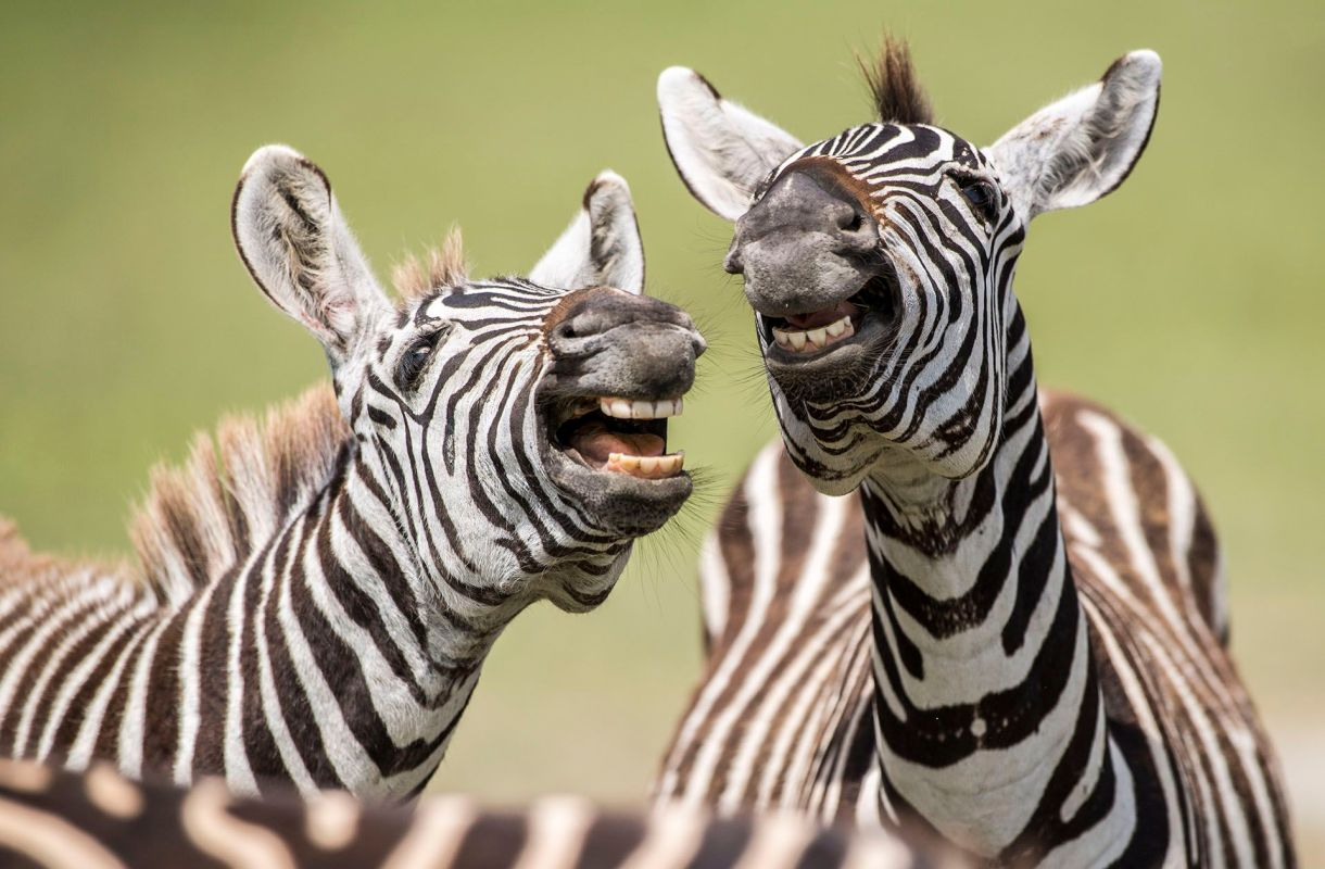 (Peter Haygarth/The Comedy Wildlife Photography Awards 2019)