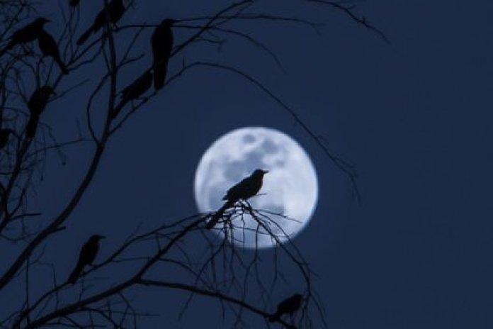 Una noche de eclipse penumbral (Foto: Cuartoscuro)