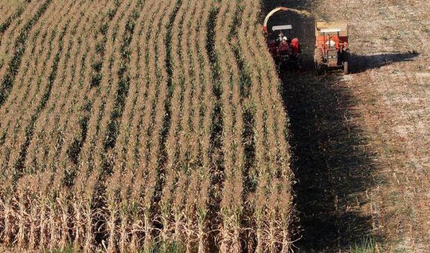 Desde Aapresid advirtieron que el cierre de las exportaciones de maíz afectará la sustentabilidad de la producción agrícola (Reuters)