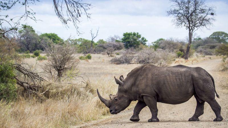 La caza de rinocerontes ha aumentado en la última década (Foto: shutterstock)