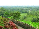 Chocolate Hills In Carmen Bohol (6)