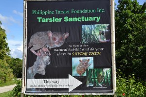 Philippine Tarsier And Wildlife Sanctuary Corella, Bohol, Philippines! 003