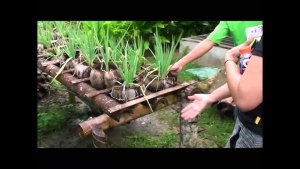 WOW! Most Amazing Organic Farming Technique In Bohol Agriculture Technology 001