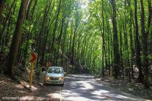 Loboc Bilar Man Made Forest Bohol Philippines Tourist Attraction 0001