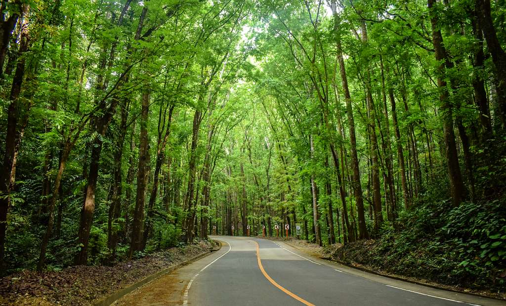 Loboc Bilar Man Made Forest Bohol Philippines Tourist Attraction 0006