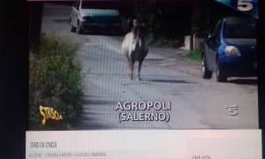 striscia la notizia agropoli cavalli