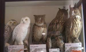 museo-naturalistico-corleto-monforte