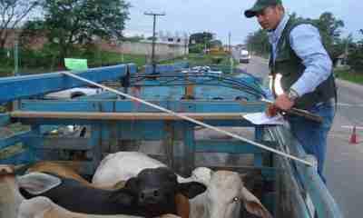 Control_exportación_carne