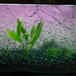 duisburg2008_157